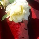 Asztalterítő taft - bordó színben