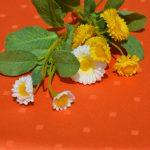 Impregnált narancs abrosz - vízlepergető terítő